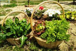 cesta verdura ecológica