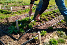 Agricultura-ecologica-madrid