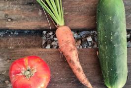 tomate pepino zanahoria
